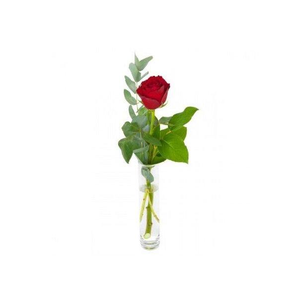 Enkel rød rose
